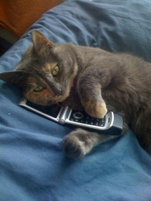 GattoTelefono-Bluebell_on_the_phone-Small