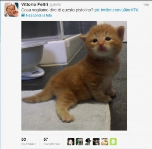 feltri-gattini-twitter