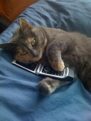 GattoTelefono-Bluebell_on_the_phone-Small